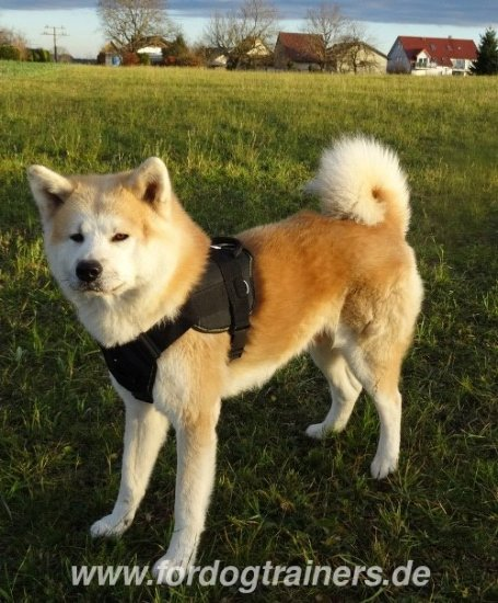 Akita Hachiko Dog Leather Harness - €59.9