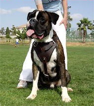 Protection,Attack Leather Dog Harness for Boxer