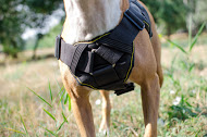 /images/Amstaff-Geschirr-Nylon-Multifunktional-FDT-1.jpg
