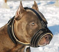 Dog Muzzle for Amstaff with Nappa Leather