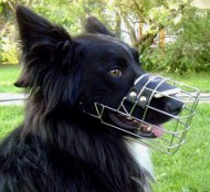 Bestseller Border-Collie Maulkorb aus Draht