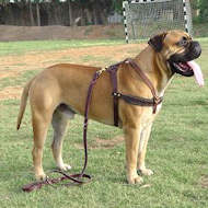 Bullmastiff Tracking ,Pulling,Walking Leather Dog Harness H5