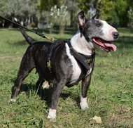 Dog Harness of Leather for Bull Terrier,Tracking Harness