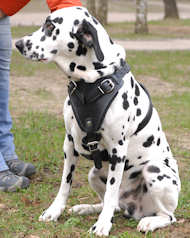 Dalmatian Protection,Attack Leather Dog Harness