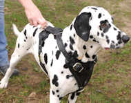 Dalmatian H1 Leather Dog Harness