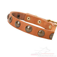 /images/Design-Hundehalsband-Leder-mit-Messing-Kreisen-25mm.jpg