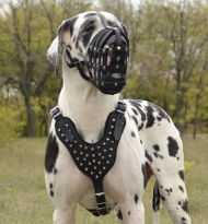 Dog Harness Great Dane