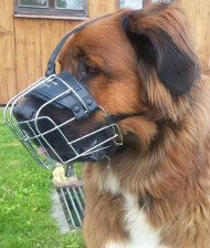Wire Dog Muzzle for German Beardog