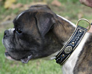 Braided Dog Collar for German Boxer