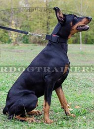 All-weather Nylon Collar for Doberman with Quick Release Buckle