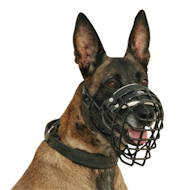Wire dog muzzle perfect for Malinois, covered by black ruber