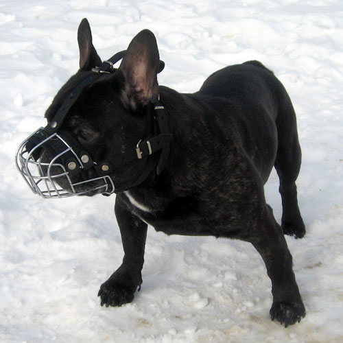 Wire dog muzzle multifunctional in use