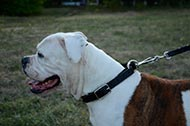 Training Dog Collar of Leather for American Bulldog