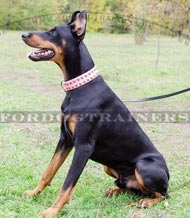 Exklusives Dobermann Halsband mit Messingnieten