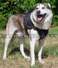 Hundeleine für huskys