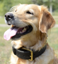 Hundehalsband Leder für Golden Retriever | Halsband K9 Training