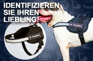 /images/H6P-American-Bulldog-mail.jpg
