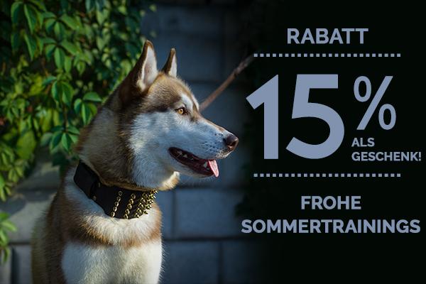 Hund Halsband Rabatt Sonderangebot kaufen