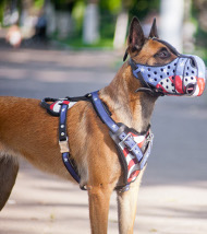 Dog Harness Leather Belgian Malinois, American Pride