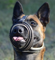 Leather Dog Muzzle for Malinois with Extra Comfort