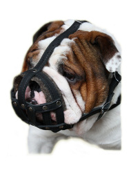 Dog Muzzle Leather Padded | English Bulldog Muzzle Individually