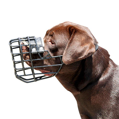 basket dog muzzle labrador buy. Wire Basket Dog Muzzle Rubberized ...