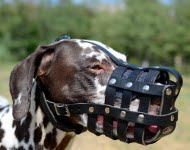 Dog Muzzle of Leather for Dalmatian