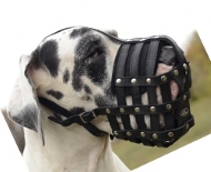 Dog Muzzle of Leather for Great Dane