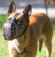 Dog Muzzle of Leather for Malinois with Barbed Wire Design