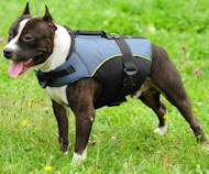 /images/New-pitbull-vest-jacket-dog-harness-geschirr-de.jpg