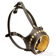 Royal Leather Dog Muzzle padded and studded