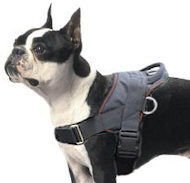K9 Nylon Geschirr für Boston Terrier