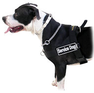 K9 Dog Harness of Nylon with Patches for Amstaff