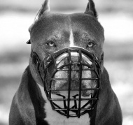 /images/Pitbull-Maulkorb-Draht.jpg
