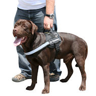 Labrador nylon reflective dog harness