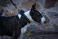 Bull Terrier leather dog collar with spikes design