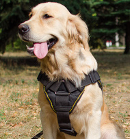 Power Training Harness for