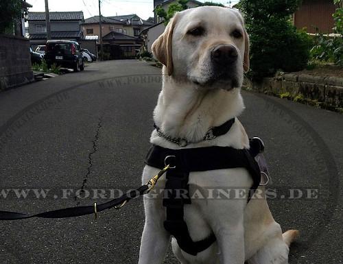 Hundeleine aus strapazierfähigem Nylon mit 2 Karabinerhaken und 3 Ringen
