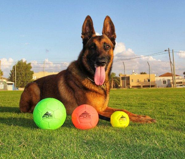 Neue Hundesport Artikeln von FDT