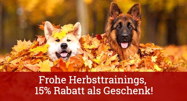 15% Rabatt für alle Hundebedarfsartikel