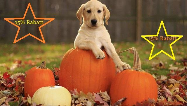rabatt zum halloween