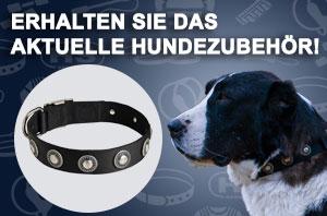 Hundehalband Nylon mit verchromten Conchos