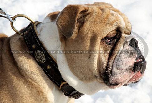 Nappapolsterung Lederhalsband für große Hunde