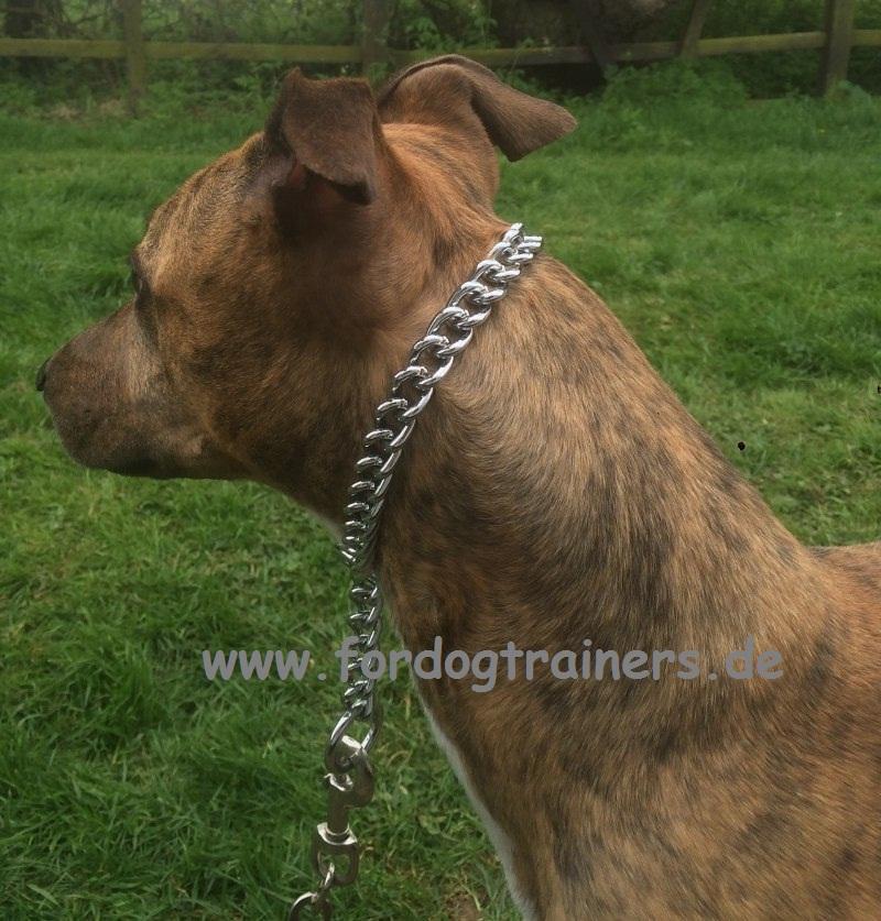 Sprenger Kette Halsband für Pitbull Terrier - €16.7