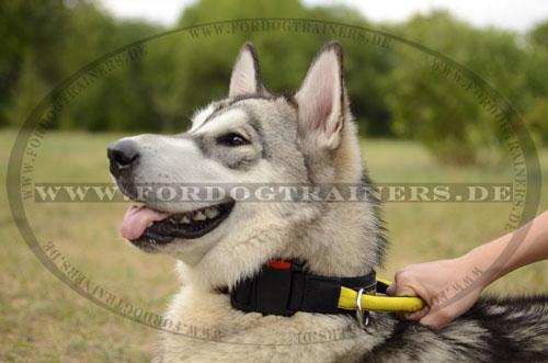 Hundehalsband mit Griff