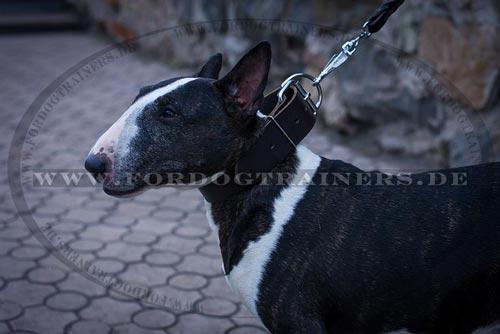 Breites Lederhalsband für Hunde Training
