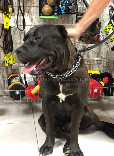Stachelhalsband für große Hunde