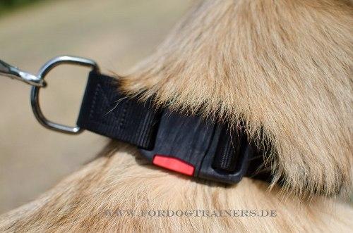 Nylon-Halsband mit Klickverschluss für Hunde