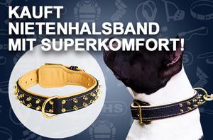 Hundehalsband Leder mit glänzenden Zubehörteilen