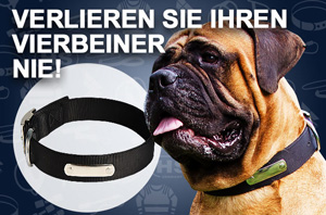 Hundehalband Nylon